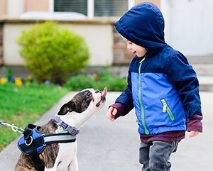 Teach young children how to be safe around dogs